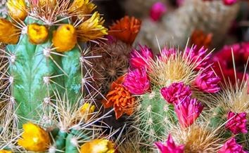 Water & Nature – How Cacti Can Save Your Life