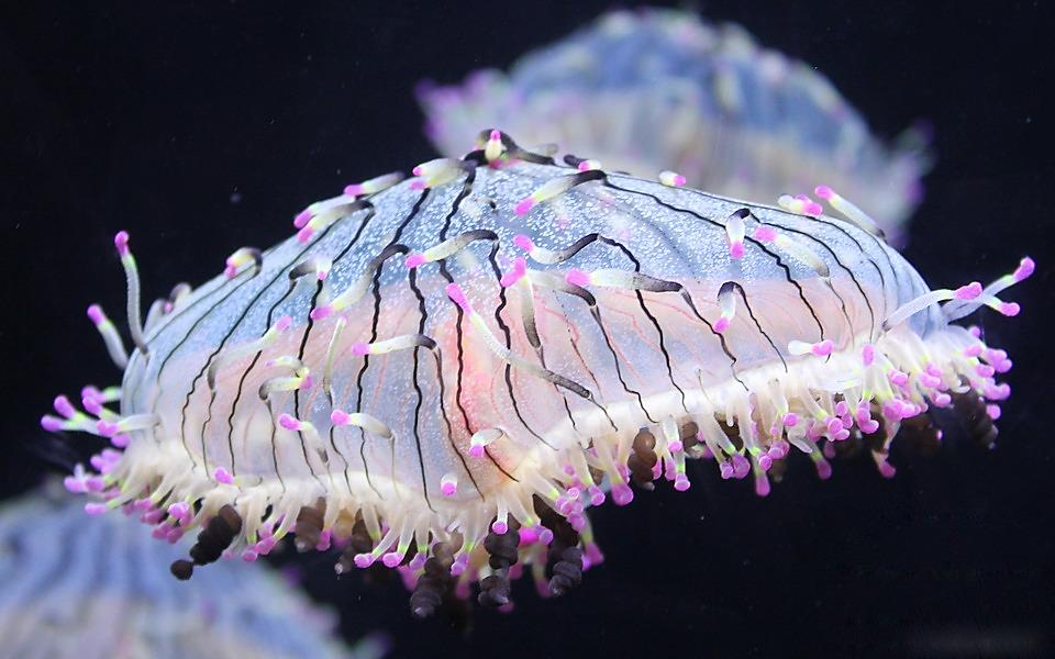 Water Cooler Wonder – the Glowing Jellyfish