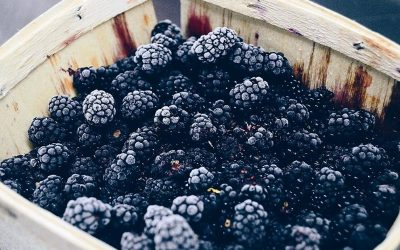 Water rich winter fruit – the ubiquitous Blackberry