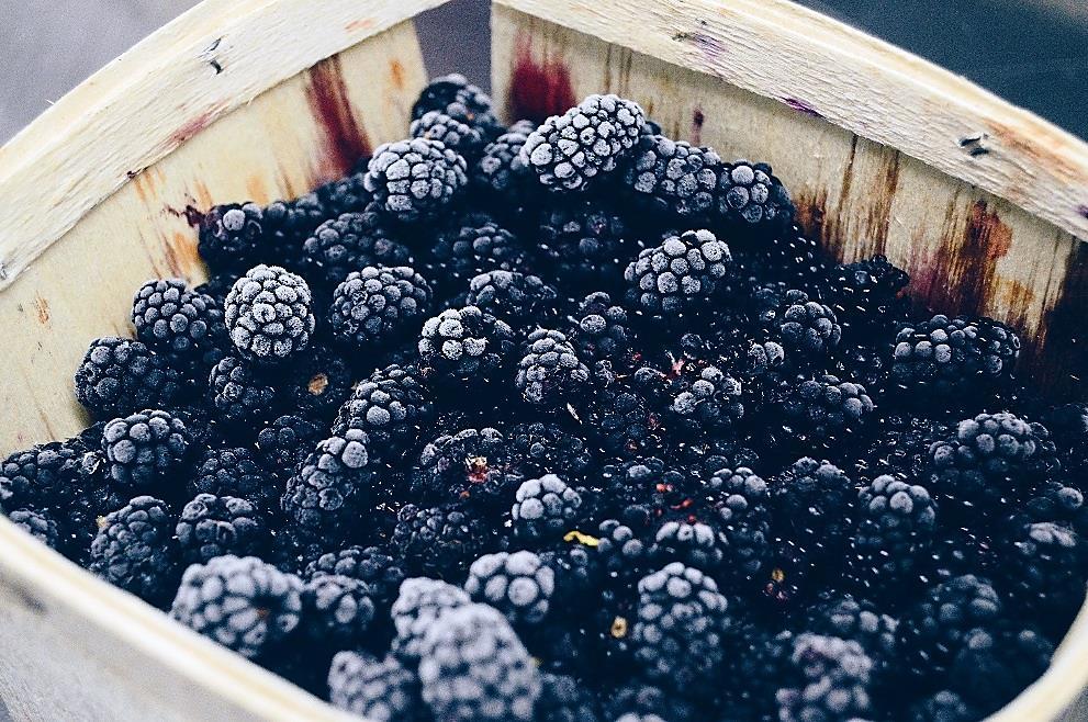 Water rich winter fruit – the ubiquitous Blackberry
