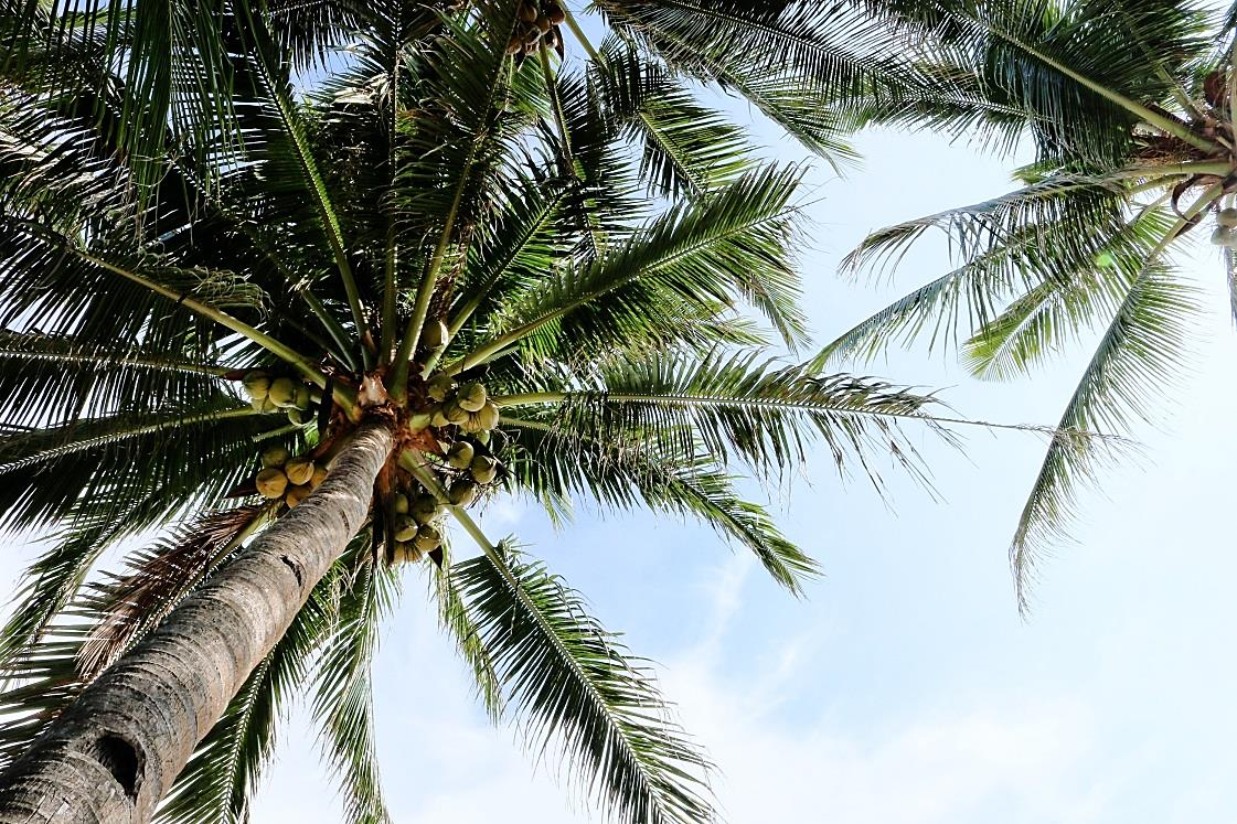 Wisdom at the Water Cooler – Are Coconuts really all that?