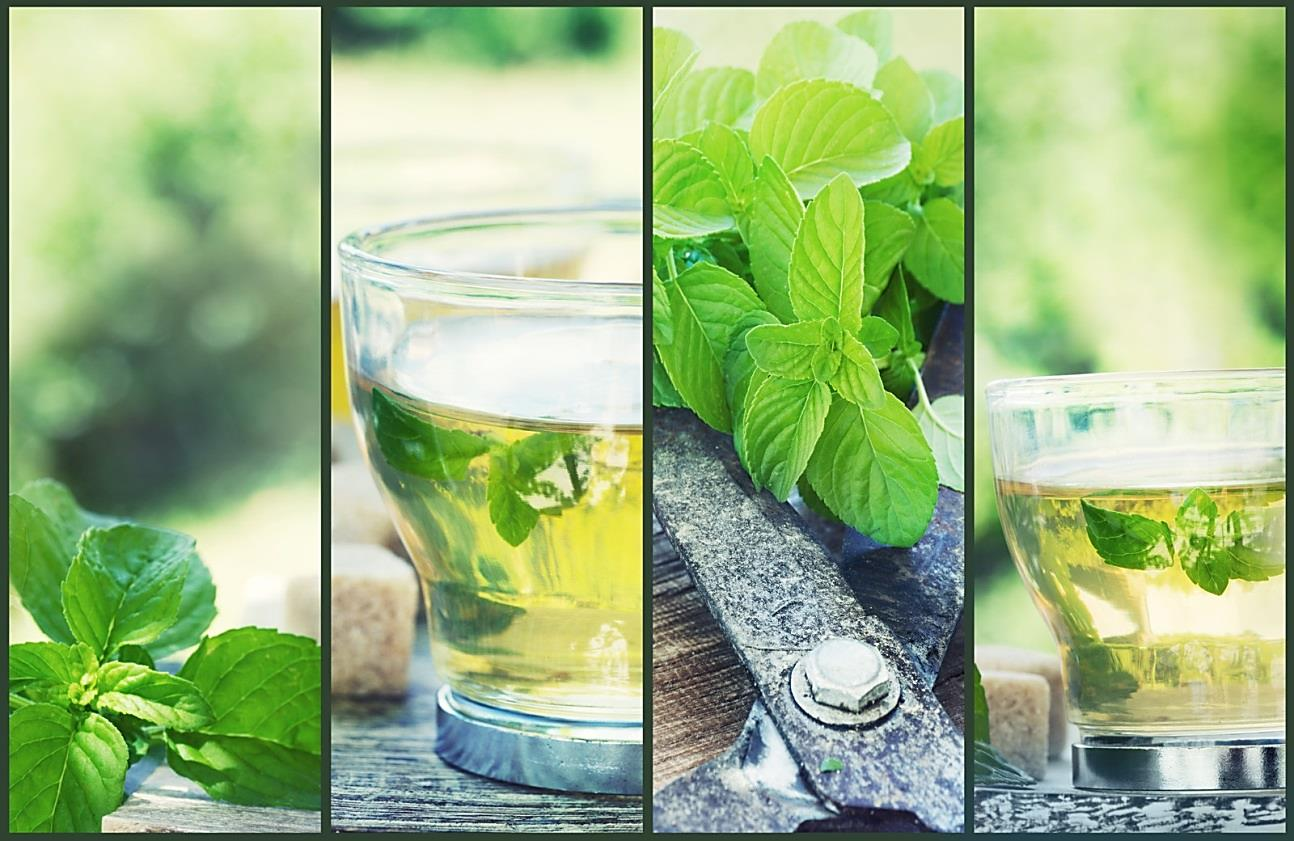 Water Cooler Health – is Mint good for You?