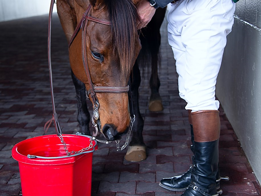 You can lead a Horse to Water … but can you lead a Human to the Water Cooler?